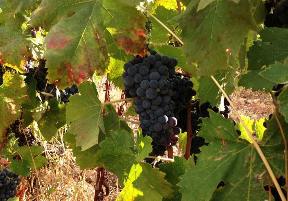 Envie de vins et de gastronomie